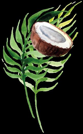 coconut11