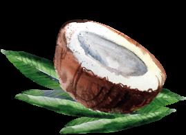 coconut12
