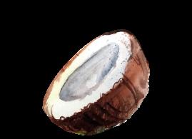 coconut14