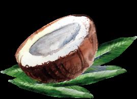 coconut15