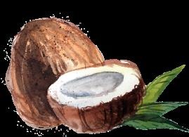 coconut16